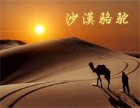 沙漠骆驼 五线谱 简谱